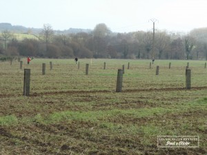 planter-des-arbres-volailles-renault-louvigne-de-bais
